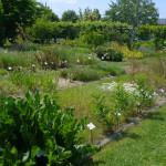 Conservatoire des Plantes de Milly-la-forêt