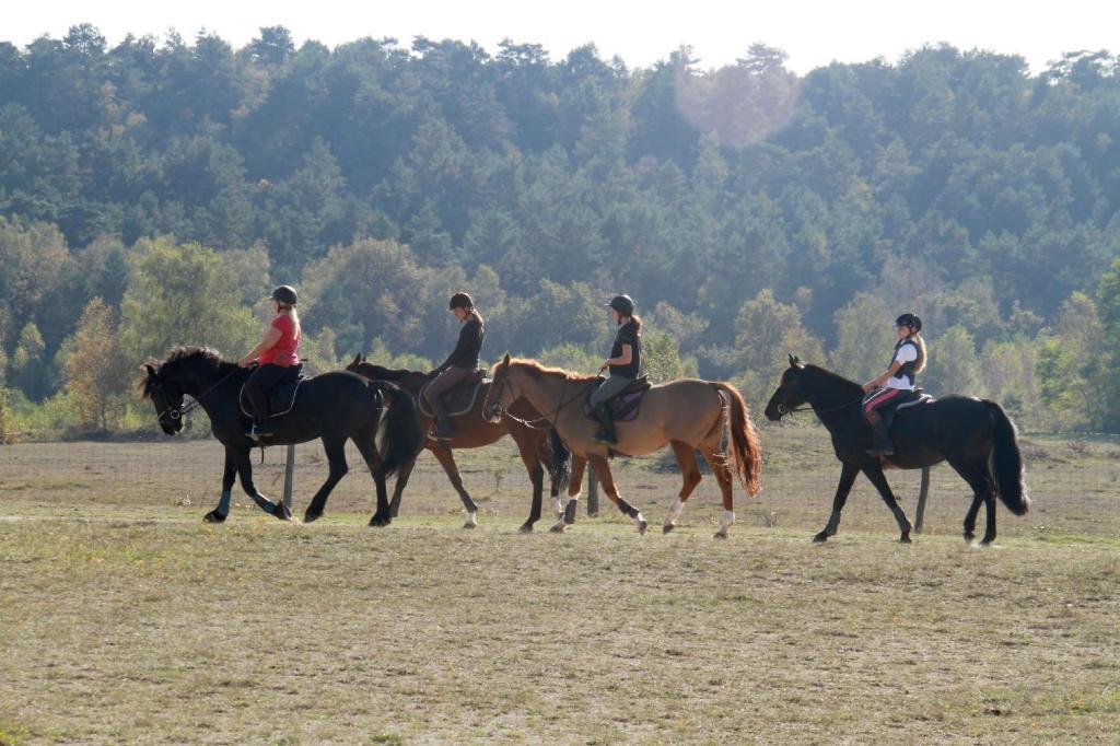 Arbonne Équitation