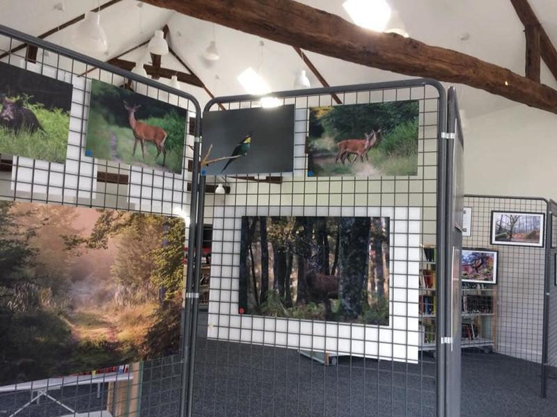 Exposition photo : la forêt de Fontainebleau