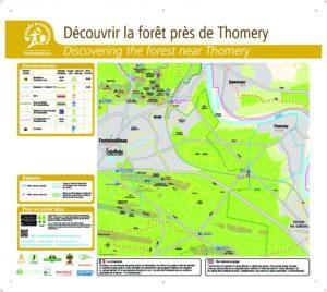 Balade en forêt près de Thomery